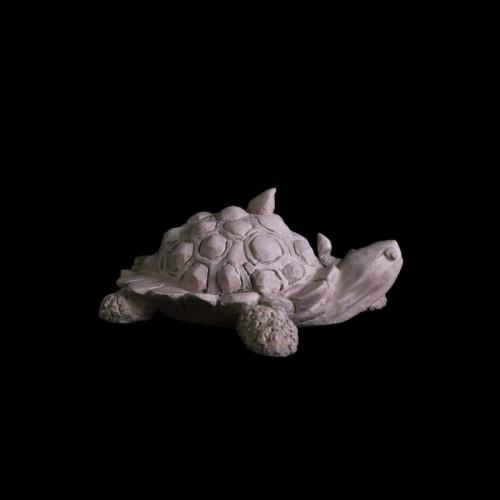 turtle-600
